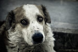 sad-dog-istock_000011589690small